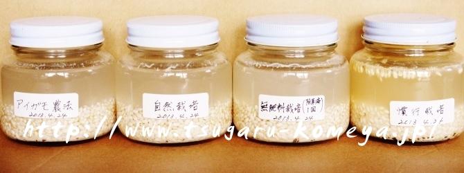 津軽米屋,つがるロマン,お米,ビンに米と水を入れた実験,2013年5月14日