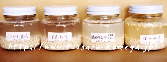 津軽米屋,つがるロマン,お米,ビンに米と水を入れた実験,2013年5月21日