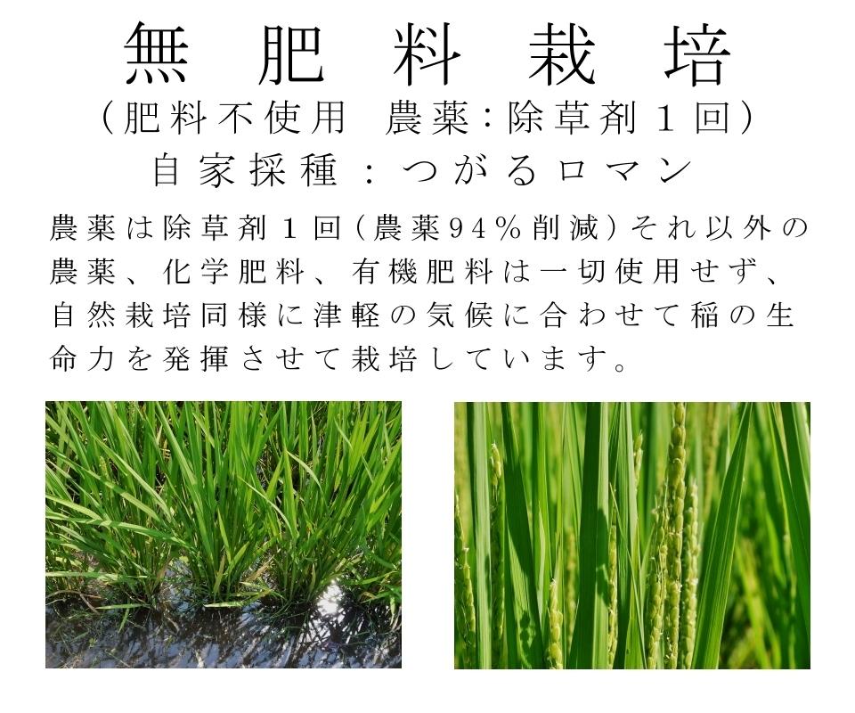 津軽米屋,玄米,無肥料,減農薬,除草剤1回,無肥料栽培,農薬削減,自家採種,つがるロマン,農薬を除草剤1回のみに抑え、それ以外の農薬や化学肥料・有機肥料は一切使用せず、自然栽培同様に津軽の気候に合わせて稲の生命力を発揮させることで農薬を削減して栽培できます。