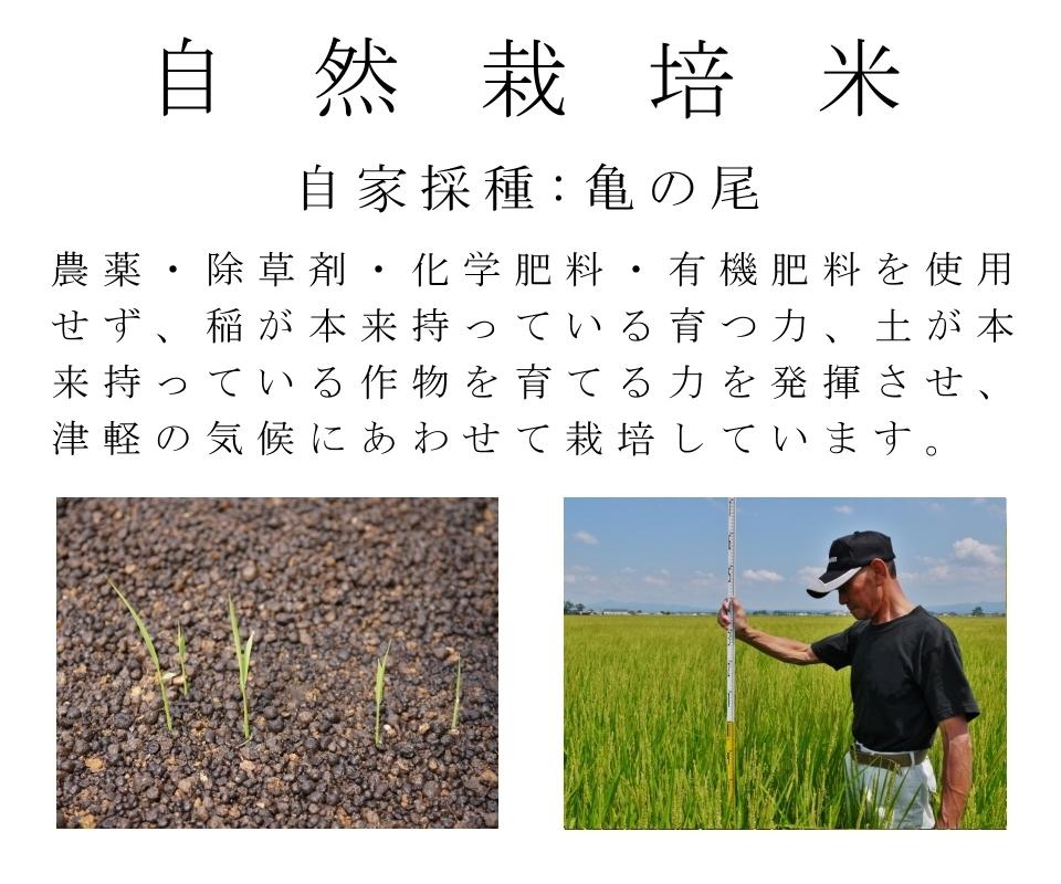 米,玄米,無農薬,無肥料,無農薬米,無農薬玄米,無農薬栽培,自然栽培米,自然栽培玄米,無肥料自然栽培,自然栽培,亀の尾【自然栽培米/自家採種/亀の尾/農薬・除草剤・化学肥料・有機肥料を使用せずに津軽の気候に合わせ、稲が本来持っている育つ力、土本来が持っている作物を育てる力を発揮させて栽培しています。】