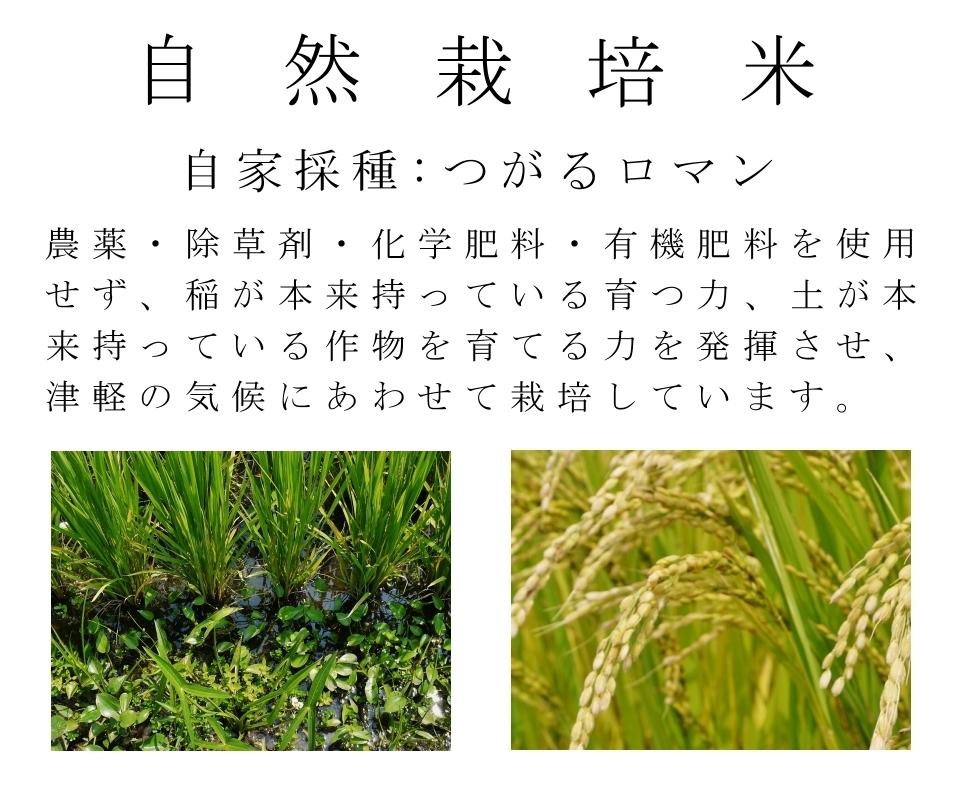 米,お米,玄米,無農薬,無肥料,つがるロマン,自家採種,農薬・除草剤・化学肥料・有機肥料を使用せず、稲が本来持っている育つ力、土が本来持っている作物を育てる力を発揮させ、津軽の気候に合わせて栽培しています。